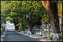 Street lined with old trees, Con Son. Con Dao Islands, Vietnam ( color)