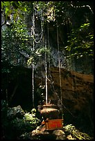 Urn and lianas near the entrance of upper cave, Phong Nha Cave. Vietnam