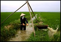 Woman doing irrigation work in a rice field. Vietnam