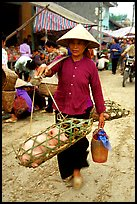 Woman carrying two live pigs, That Khe market. Northest Vietnam (color)