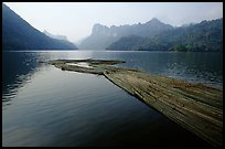 Wood being floated on Ba Be Lake. Northeast Vietnam (color)