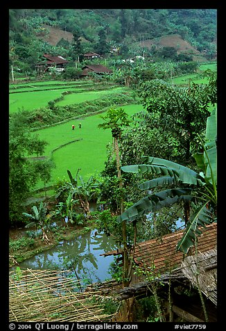 Rice fields near Cho Ra. Northeast Vietnam