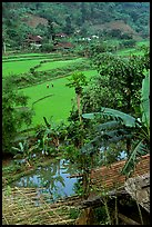 Rice fields near Cho Ra. Northeast Vietnam (color)