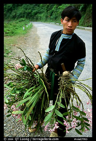 Man of Hmong ethnicity selling wild orchids, near Moc Chau. Vietnam (color)