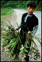Man of Hmong ethnicity selling wild orchids, near Moc Chau. Vietnam ( color)