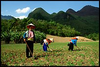 Dzao women raking the fields, near Tuan Giao. Northwest Vietnam (color)
