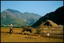 Plowing a field with a water buffalo close to a hut, near Tuan Giao. Northwest Vietnam (color)