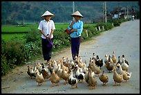 Thai women herding ducks, Tuan Giao. Northwest Vietnam (color)