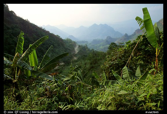 Banana leaves and mountains, between Lai Chau and Tam Duong. Northwest Vietnam