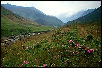 Wildflowers and mountains in the Tram Ton Pass area. Sapa, Vietnam ( color)