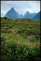 Wildflowers and peaks in the Tram Ton Pass area. Sapa, Vietnam ( color)