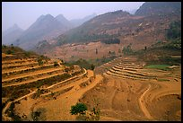 Dry cultivated terraces. Bac Ha, Vietnam ( color)