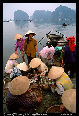 Women gathering around fresh fish catch. Halong Bay, Vietnam