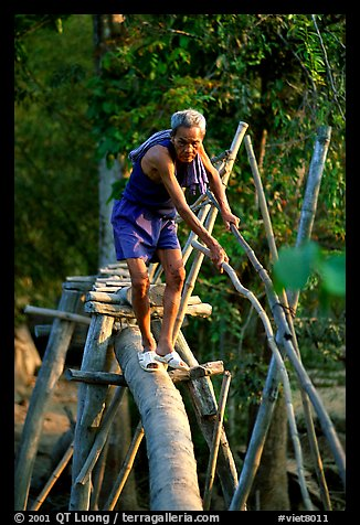 Elderly man not afraid of crossing a bamboo bridge, near Long Xuyen. Vietnam (color)