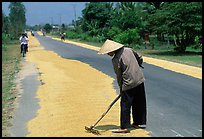 Rice being dried on sides of road. Nobody seems disturbed by the occasional truck. Mekong Delta, Vietnam (color)