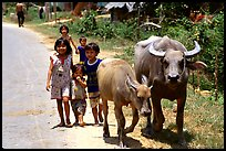 Children walk water buffalos,  very placid and strong animals. Mekong Delta, Vietnam (color)