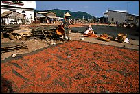 Shrimp being dried. Ha Tien, Vietnam (color)