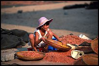 Girl sorting dried shrimp. Ha Tien, Vietnam ( color)