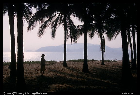 Palm-tree fringed beach, Nha Trang. Vietnam