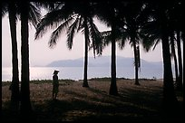 Palm-tree fringed beach, Nha Trang. Vietnam (color)