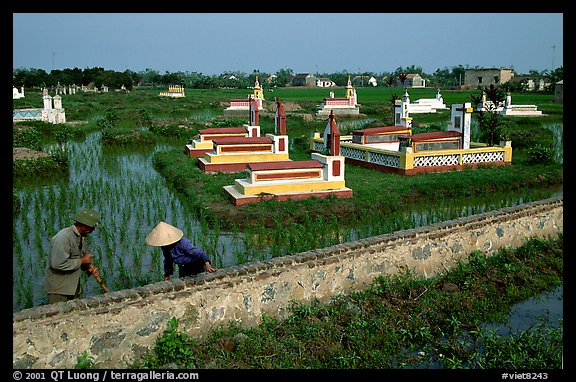 Catholic tombs set in rice field. Ninh Binh,  Vietnam (color)