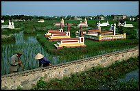 Catholic tombs set in rice field. Ninh Binh,  Vietnam ( color)