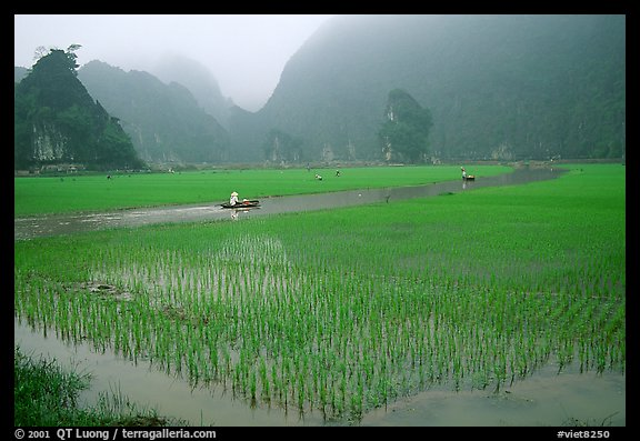 Rice fields, river, and misty mountains of Tam Coc. Ninh Binh,  Vietnam (color)