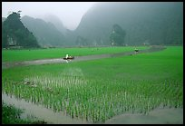 Rice fields, river, and misty mountains of Tam Coc. Ninh Binh,  Vietnam