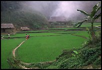 Rice cultures at a mountain village. Vietnam (color)