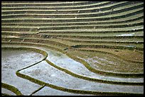 Terraced rice fields. Sapa, Vietnam (color)