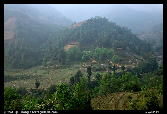 Morning fog on terraced rice fields and village. Sapa, Vietnam (color)