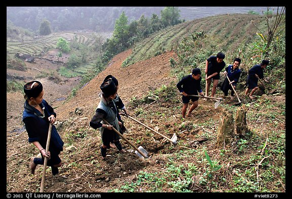 Hmong people working on terraces. Sapa, Vietnam