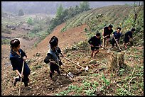 Hmong people working on terraces. Sapa, Vietnam (color)