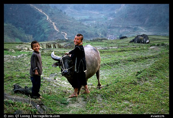 Playing with the water buffalo. Sapa, Vietnam (color)