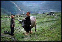 Playing with the water buffalo. Sapa, Vietnam ( color)
