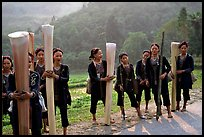 Ethnic minority women carrying banana trunks. Vietnam