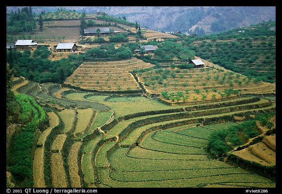 Dry terraced hills and village. Bac Ha, Vietnam
