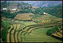 Dry terraced hills and village. Bac Ha, Vietnam (color)