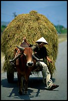 Cow carriage loaded with hay. Mekong Delta, Vietnam