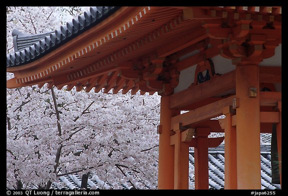 Picture/Photo: Cherry tree in bloom and temple roof. Kyoto ...