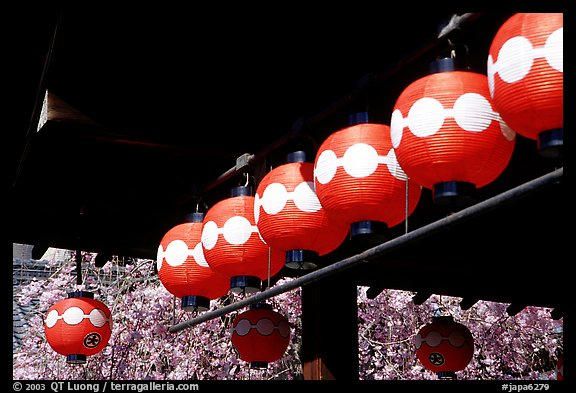 Lanterns and cherry blooms. Kyoto, Japan (color)