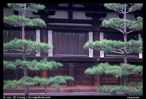 Pines and wooden walls, Sanjusangen-do Temple. Kyoto, Japan (color)