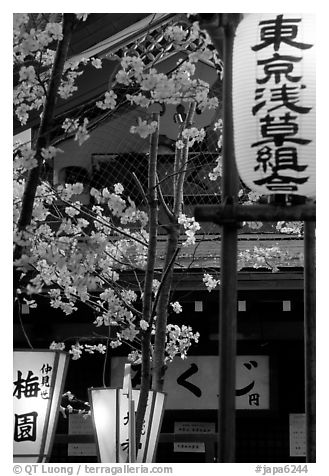 Lanterns and cherry blossoms on Nakamise-dori, Asakusa. Tokyo, Japan (black and white)