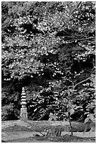 Garden with trees and mosses on the grounds of the Kinkaku-ji Temple. Kyoto, Japan ( black and white)