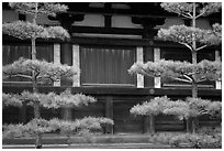 Pines and wooden walls, Sanjusangen-do Temple. Kyoto, Japan ( black and white)