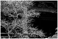 Delicate cherry tree and temple. Nikko, Japan ( black and white)