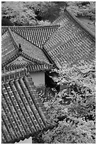 Roofs and cherry blossoms seen from the castle donjon. Himeji, Japan (black and white)