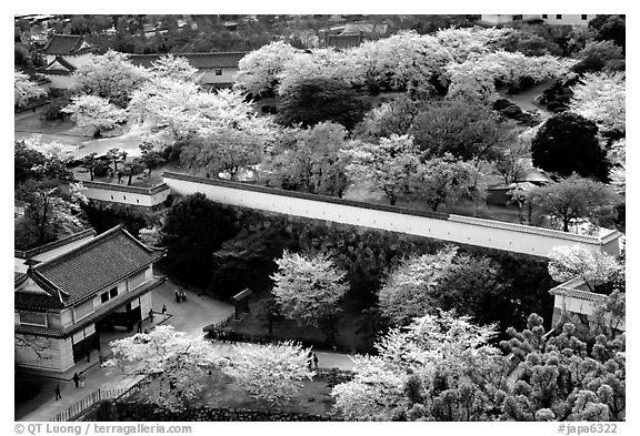 Castle grounds and walls with blossoming cherry trees. Himeji, Japan (black and white)