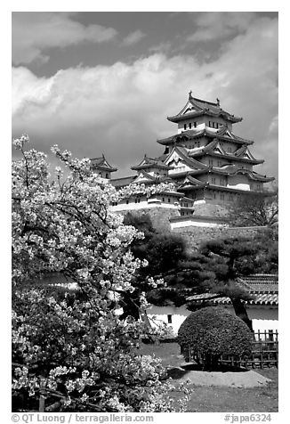 Blossoming cherry tree and castle. Himeji, Japan (black and white)