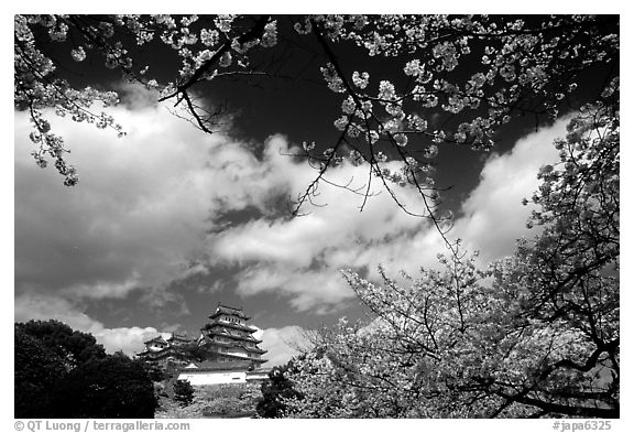Branches Of Cherry Blossoms And Castle Himeji Japan